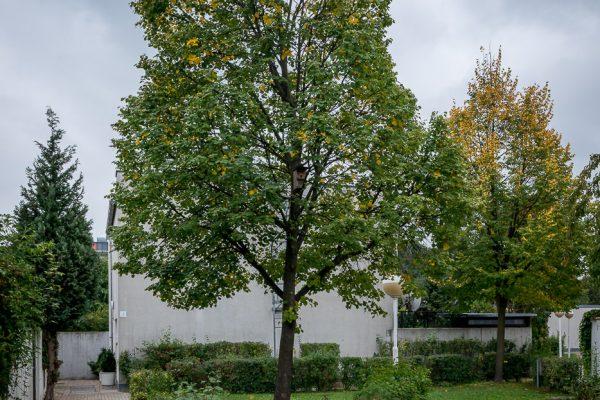 MK Landschaftsarchitektur Projekt Kapellenweg 30